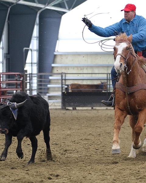 Los edificios de membrana tensada hacen el escenario perfecto para caballos en el oeste