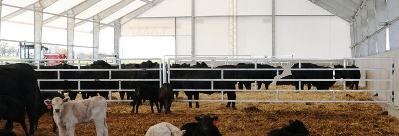 Tensoestructura con marcos de acero rigido para ganado